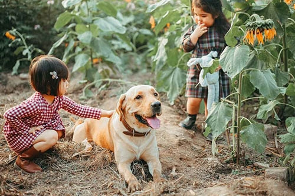Biểu cảm sợ chó vô cùng đáng yêu của 2 cô bé 'gây sốt' cộng đồng mạng - ảnh 3