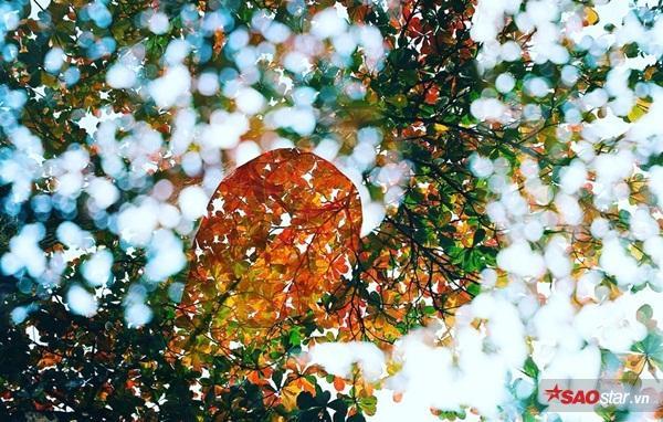 Không hẹn mà gặp thời điểm cuối đông - đầu xuân là thời khắc hàng nghìn cây bàng ở Hà Nội đồng loạt thay lá, tạo nên một bức tranh phong cảnh đầy ấn tượng.