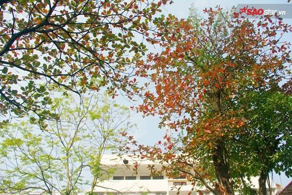 Phố Phùng Hưng có rất nhiều gốc bàng lớn với tán xòe rộng từ vỉa hè bên này sang bên kia, bao trùm cả phố.