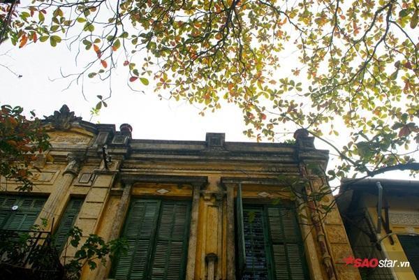 """""""Mùa về trên mái phố"""" - ô cửa thời Pháp thuộc trên phố Phùng Hưng càng trở nên thơ mộng với tán bàng phía trước."""
