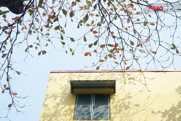 Ô cửa sổ đầy hoài niệm trên phố Tràng Thi. Đây cũng là một trong những tuyến phố được quy hoạch trồng bàng đầu tiên thời kỳ Pháp thuộc năm xưa.