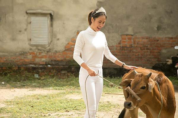 Hoa hậu Toàn cầu 2016 giản dị dắt bò đi làm từ thiện tại Đà Nẵng - Ảnh 5
