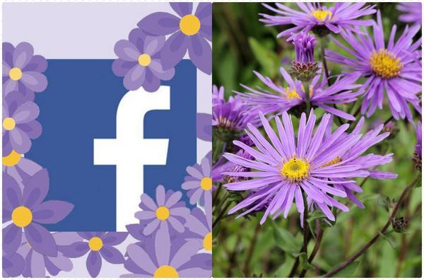 'Giải oan' cho biểu tượng hoa tím đang gây bão mạng xã hội của Facebook