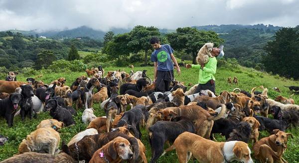 Thiên đường của những chú chó hoang: Hội mê chó chắc chắn thích điều này - Ảnh 1.