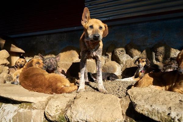 Thiên đường của những chú chó hoang: Hội mê chó chắc chắn thích điều này - Ảnh 2.