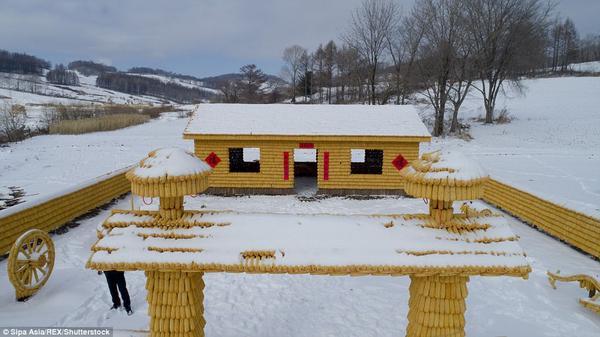 Nông dân bỏ tiền mua 30.000 bắp ngô để xây nhà khiến hàng xóm 'choáng váng' - ảnh 1