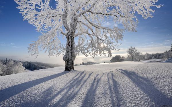 Rừng Đen nằm ở phía Tây Nam nước Đức cũng vươn vai đón chào ngày mới. Đây là một trong những địa điểm du lịch tuyệt vời nhất trên thế giới, thu hút hàng triệu khách du lịch tham quan mỗi năm. Rừng đen mùa nào cũng đẹp đến nao lòng, một nét đẹp thanh khiết và dịu êm không ngôn từ nào tả xiết.