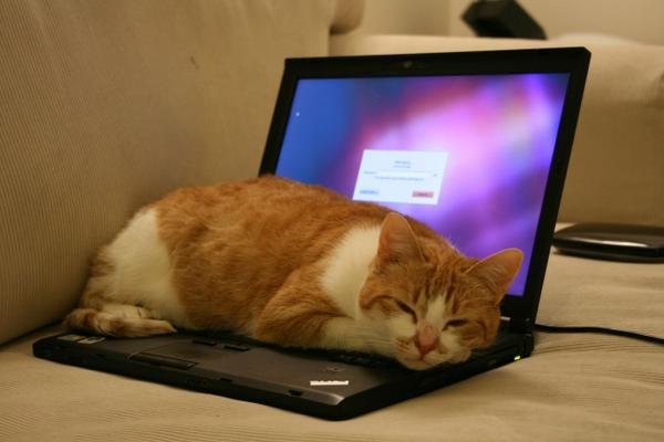 13 thói quen sai lầm khiến laptop của bạn 'chết dần chết mòn' theo thời gian - Ảnh 1.
