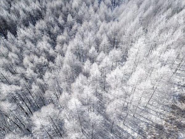 Những rừng cây, mái nhà đều bị tuyết phủ trắng xóa nằm bên thung lũng và dòng sông Shogawa.