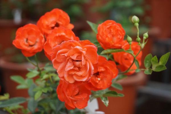 Lễ hội hoa năm nay mong đợi nhận được sự quan tâm của nhiều người.