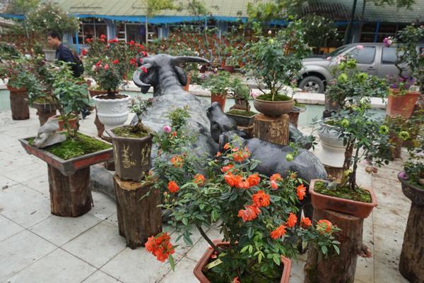 Khuôn viên nơi tổ chức lễ hội được trang trí theo chủ đề về các loại hoa khác nhau. Trong ảnh khuôn viên hồng bonsai.