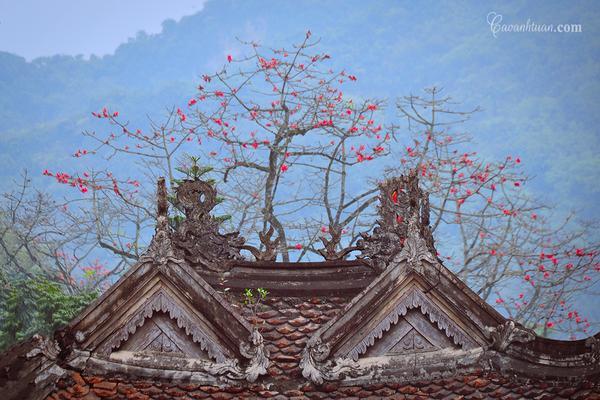 Hoa gạo cũng là một trong những loài hoa gây thương nhớ với những nhạc sĩ, nhà thơ, họa sĩ, đặc biệt là nhiếp ảnh gia Việt.