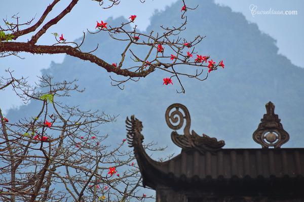 Thôn Đoan Nữ hay chùa Hương là địa điểm nổi tiếng mà khoảng thời gian này nhiều người tìm về để ngắm nhìn và lưu giữ những khoảnh khắc đẹp của loài hoa thôn quê này.