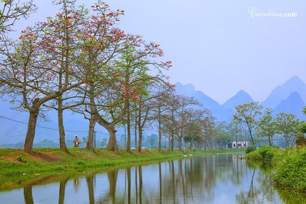 Rặng cây hoa gạo chạy dài tít tắp ở thôn Đoan Nữ.