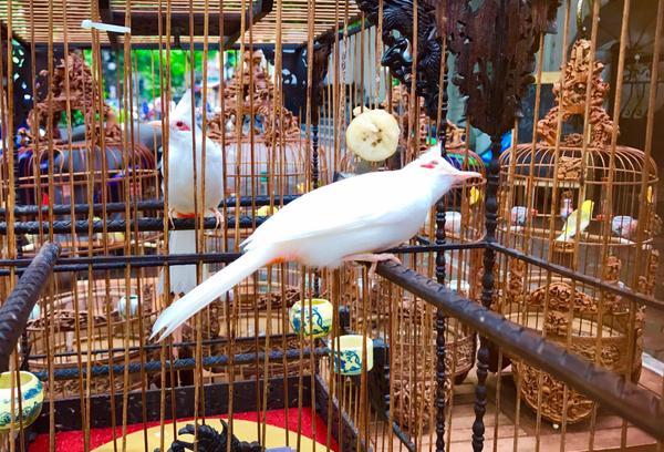 """Tận thấy đàn chim quý giá 10 tỷ của ông """"vua"""" chim màu Việt Nam"""