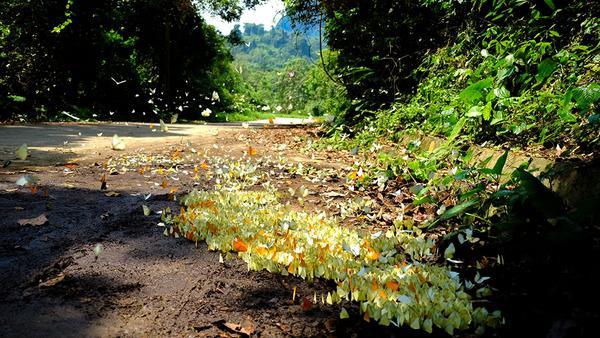 Từ ngay cổng vào, bạn sẽ phải choáng ngợp trước cảnh tượng vô vàn cánh bướm đầy màu sắc giữa màu xanh của cánh rừng già.